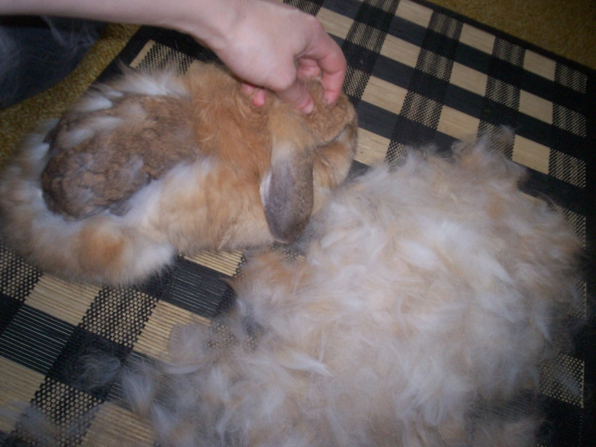 What to Do with Rabbit Fur
