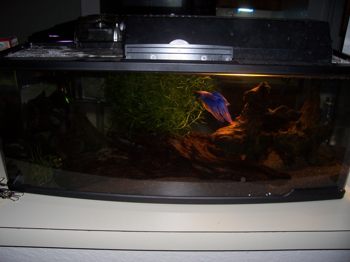 Aquatics: Set Up a Fresh Water Aquarium for Cheap!