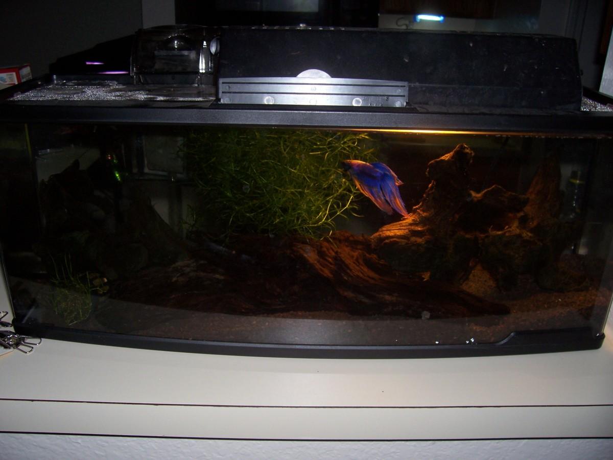 Aquatics set up a fresh water aquarium for cheap for Setting up a fish tank