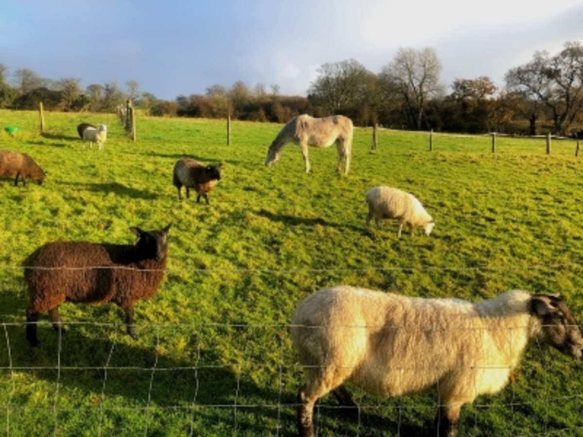 You can expect to see farmyard animals throughout the walk.