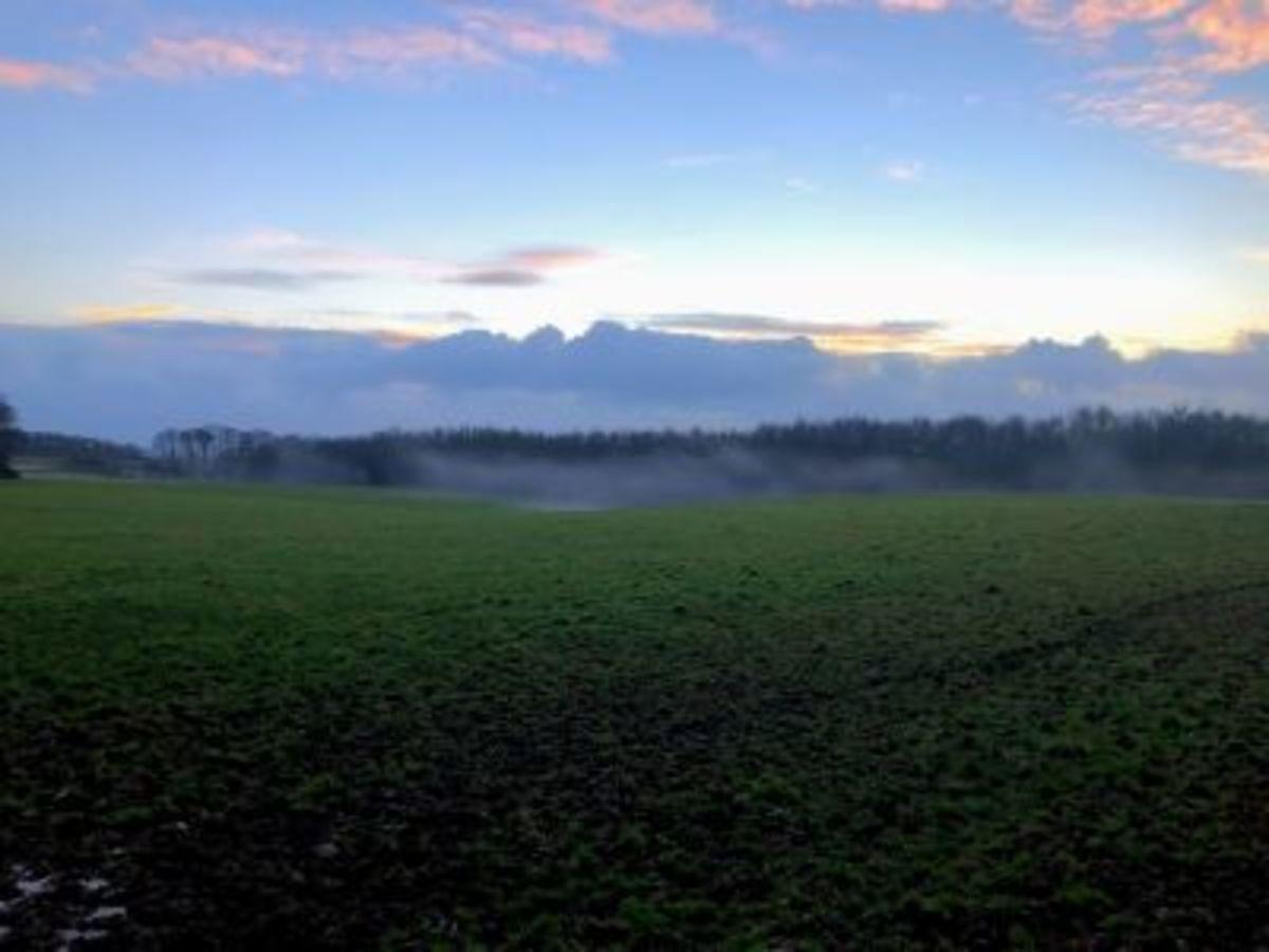Mist heading through the trees.