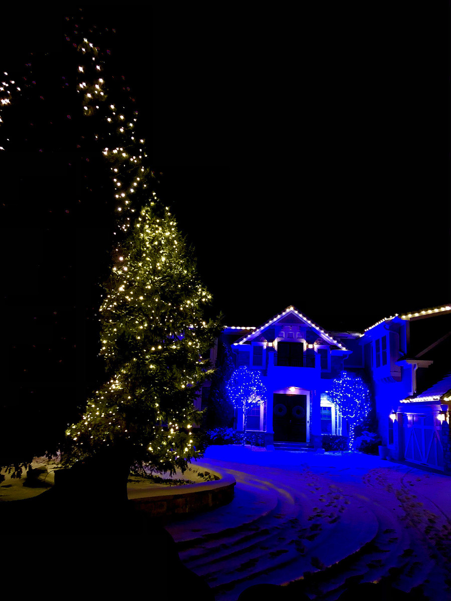 I like the contrast of the blue house in the large tree with warm white lights.