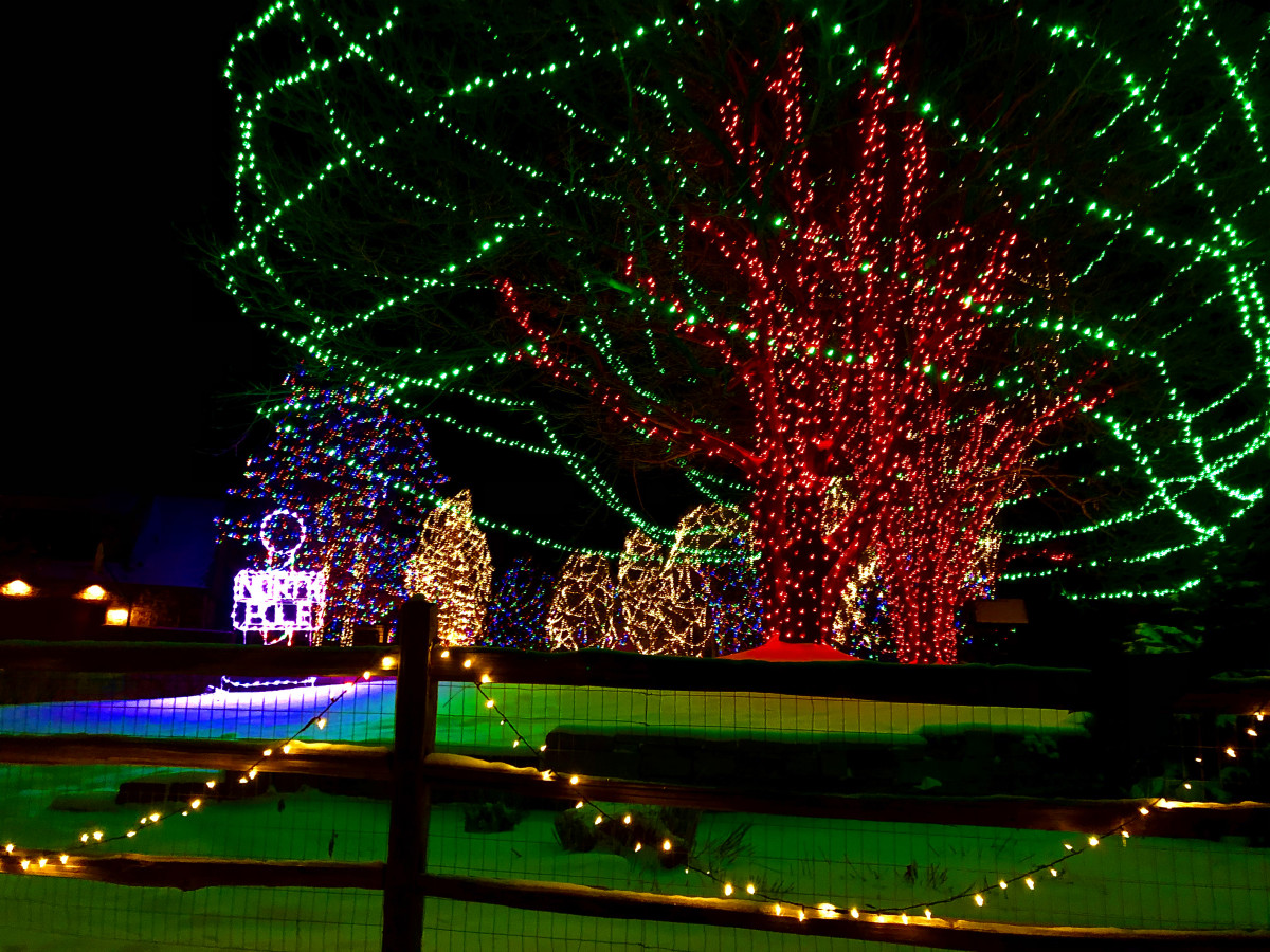 This house on Alexander Ct. has over 30 giant lighted trees.
