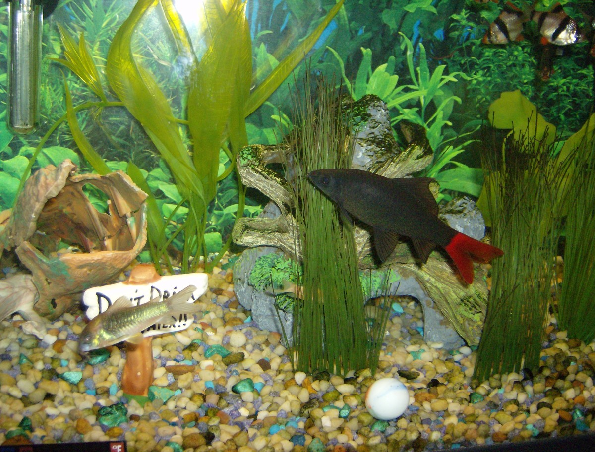 Aquarium maintenance water changes pethelpful for How to change fish tank water