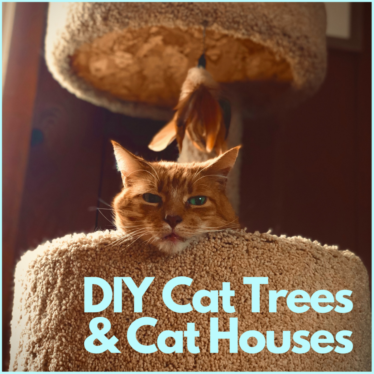 Check out these project ideas and make a special place for your kitty.