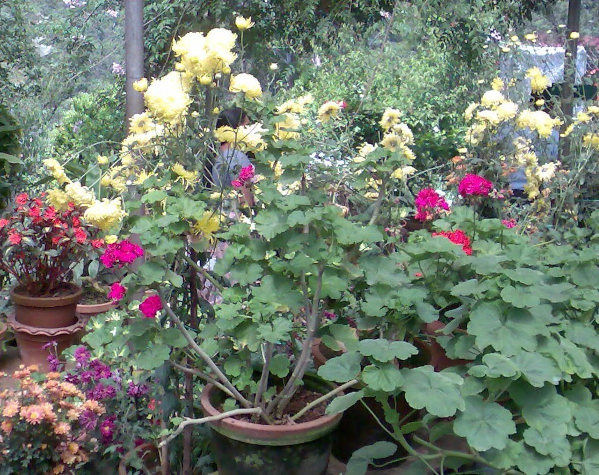 Botanical Garden, Munnar, Kerala .... photograph by Vanita Thakkar