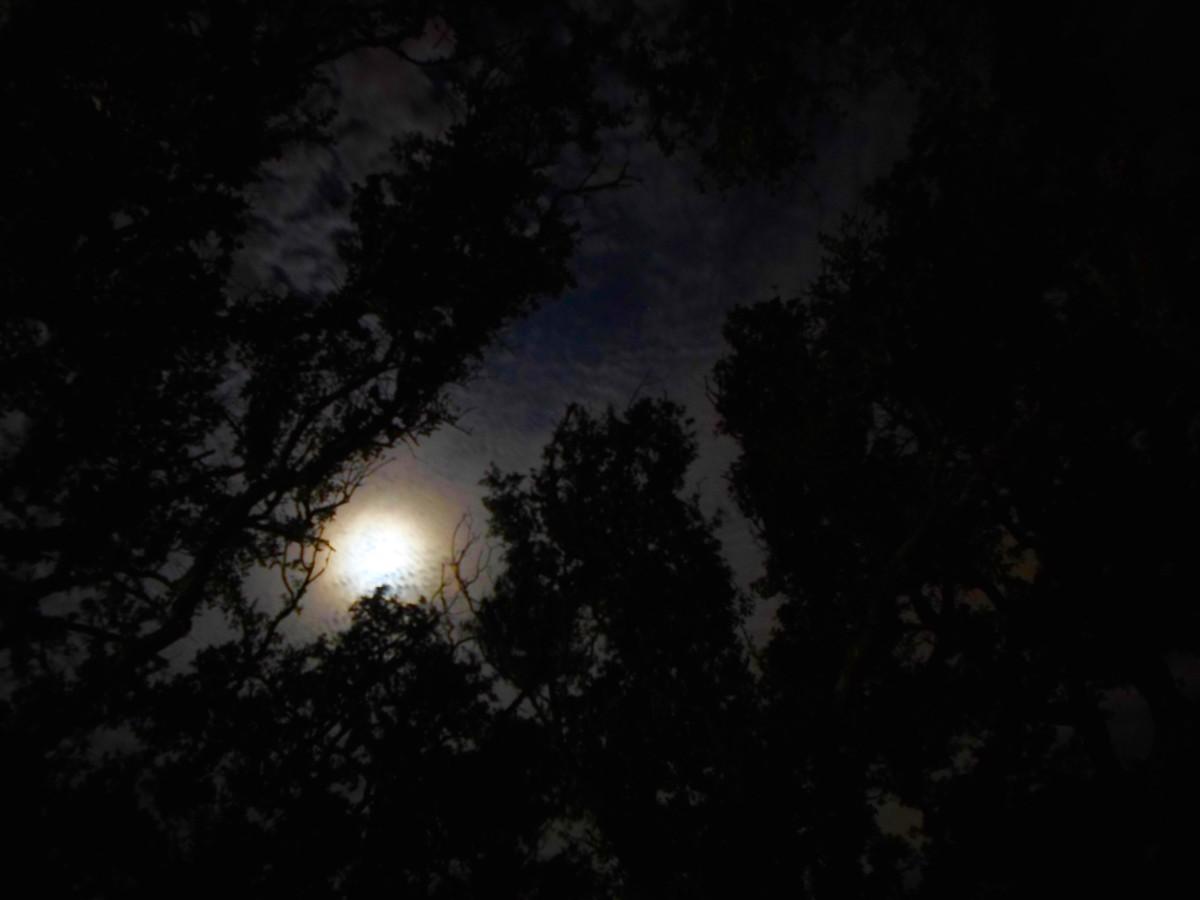 moon-children-aries-moon