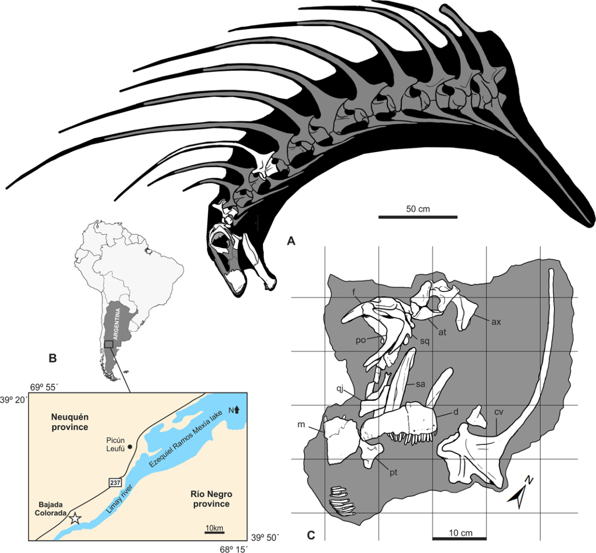 Bajadasaurus' place of discovery, projected head and neck anatomy, and known remains (in white).