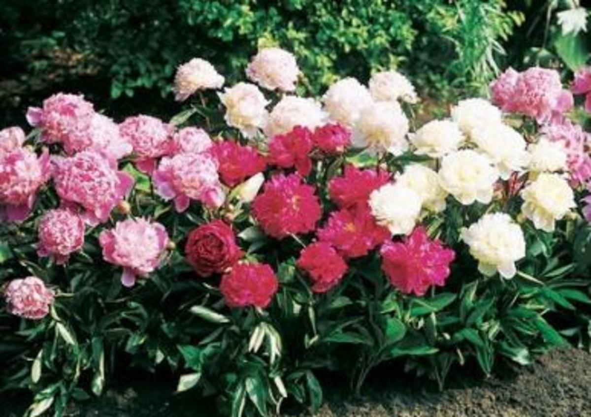 Flowers and garden plants can bring lots of cash when you know your market