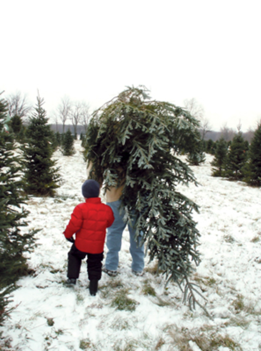 carrying christmas tree