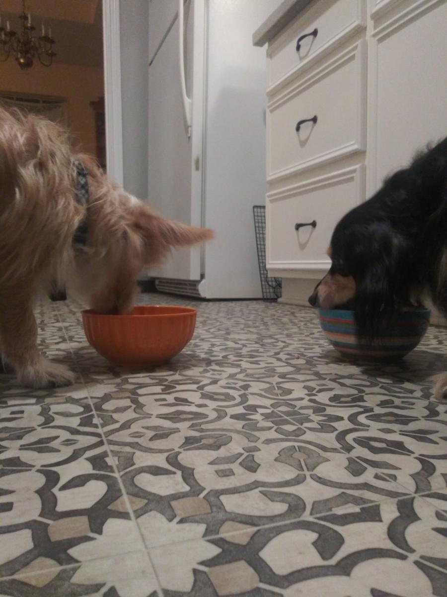 homemade-dog-food-meals