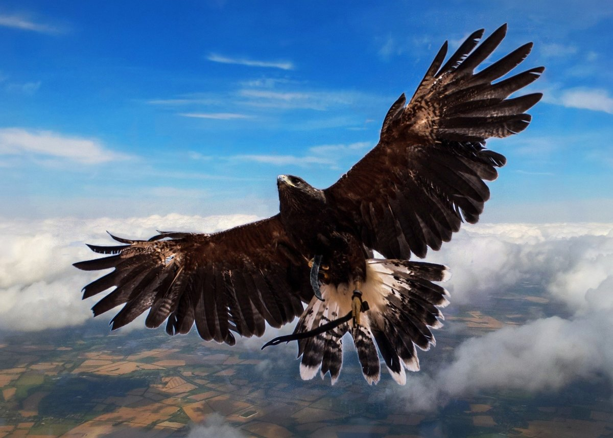 A Hawk -- Predator on Smaller Birds and on This Old Man's Imagination. -- Val Karas