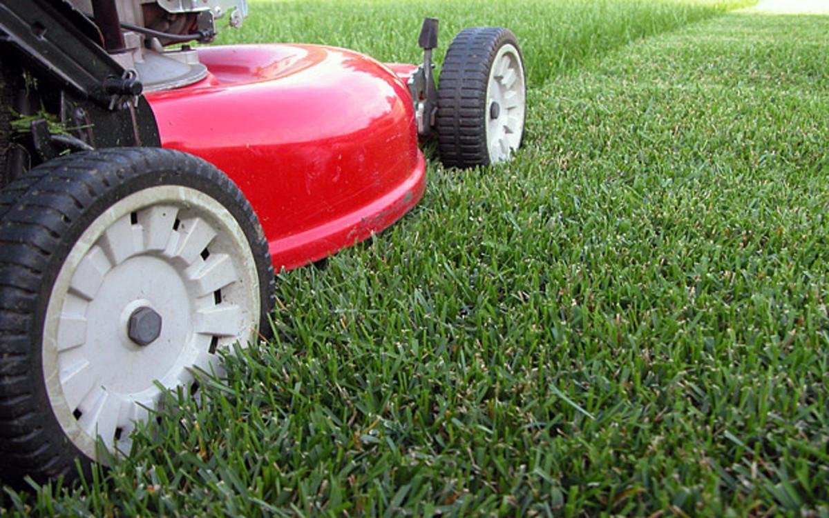 Cut grass at least three inches high