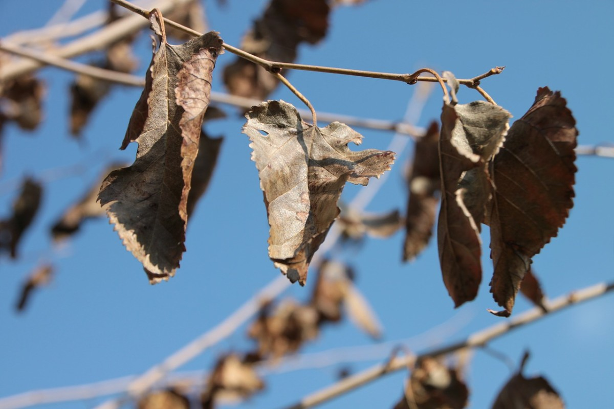 The Leaf - A Flash Fiction Story