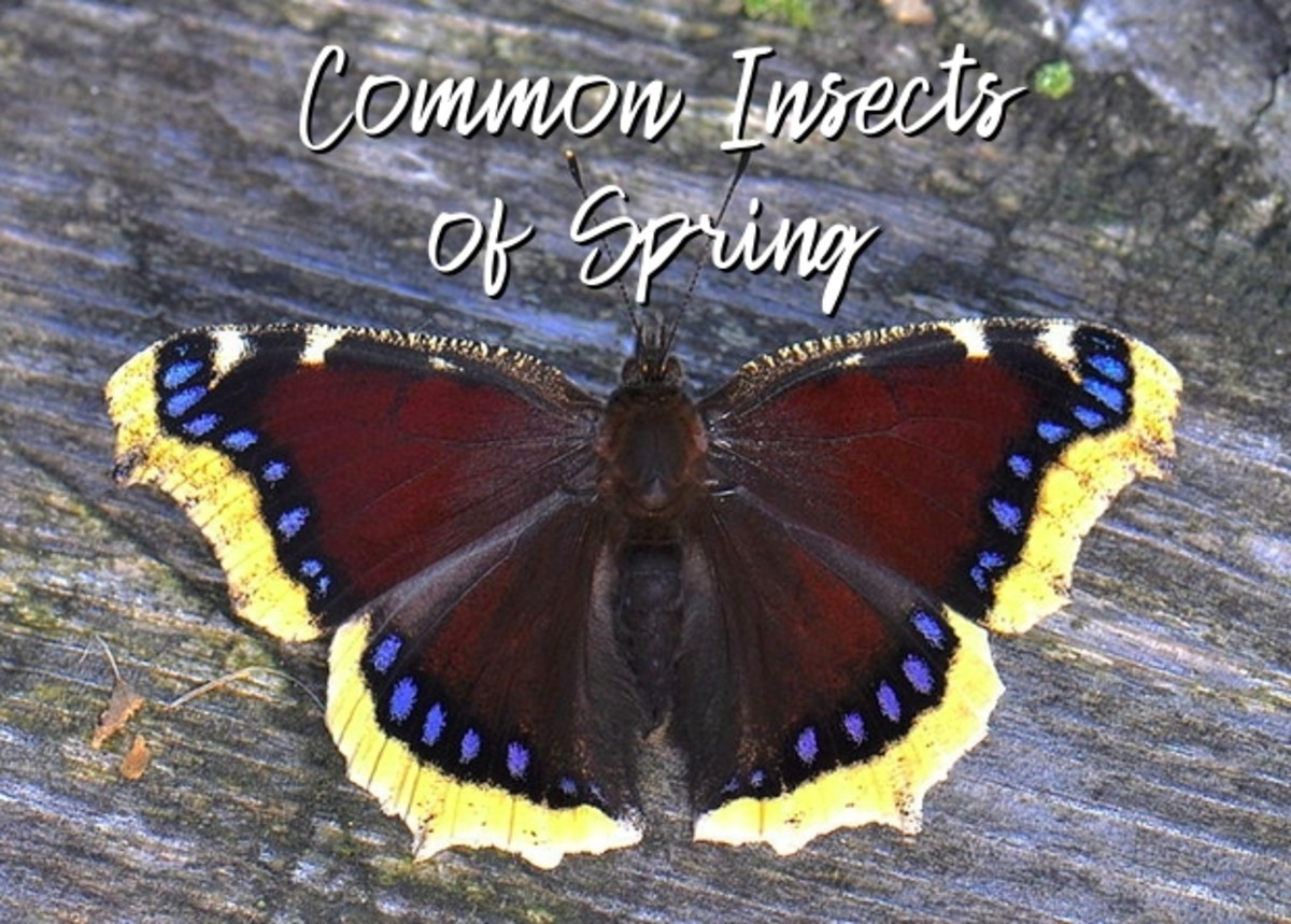 a-guide-to-common-insects-of-spring