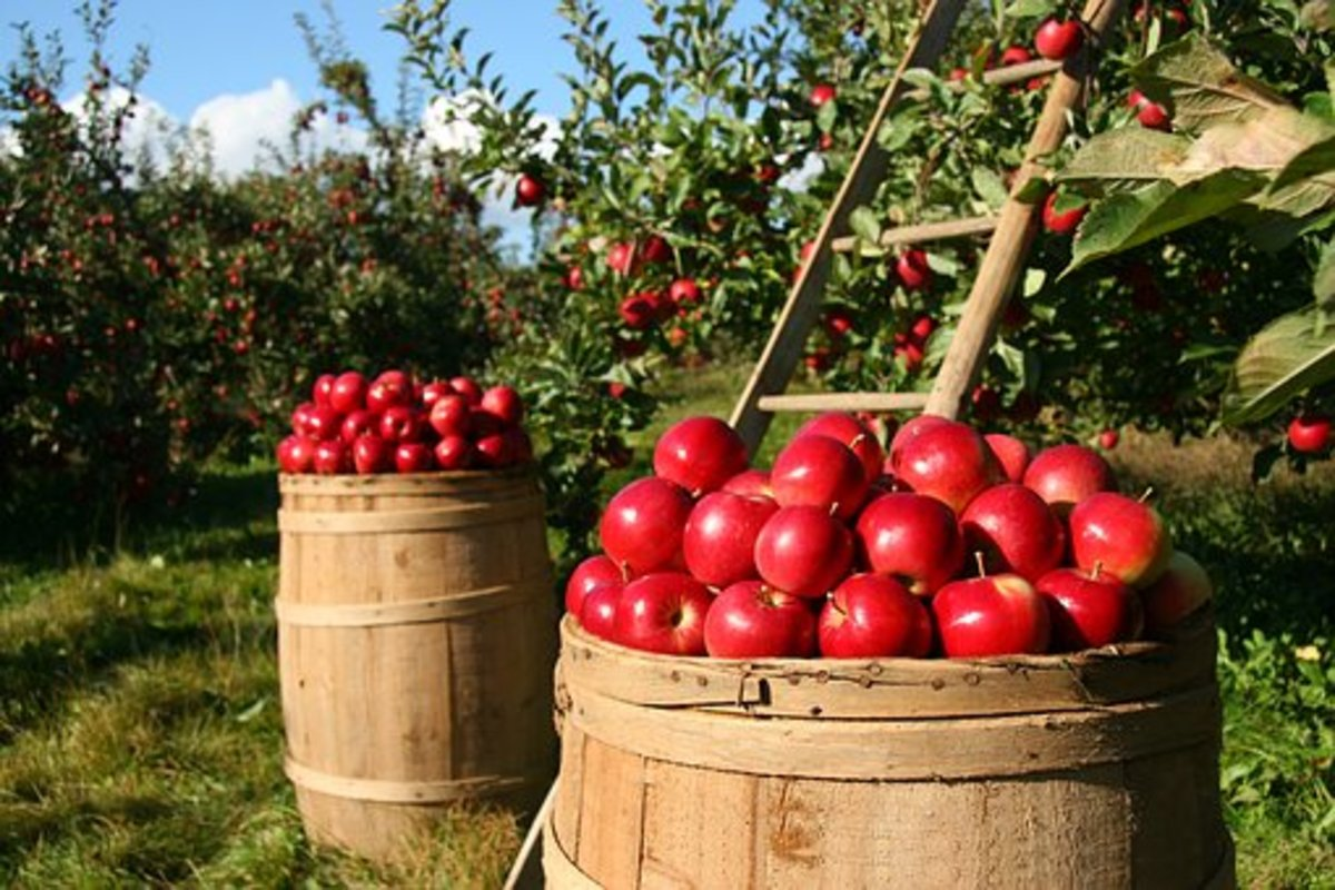 If you have the opportunity, go to an U-Pick organic apple orchard in the Fall.  Experience biting into a fresh, unwashed, pesticide-and-wax-free apple.