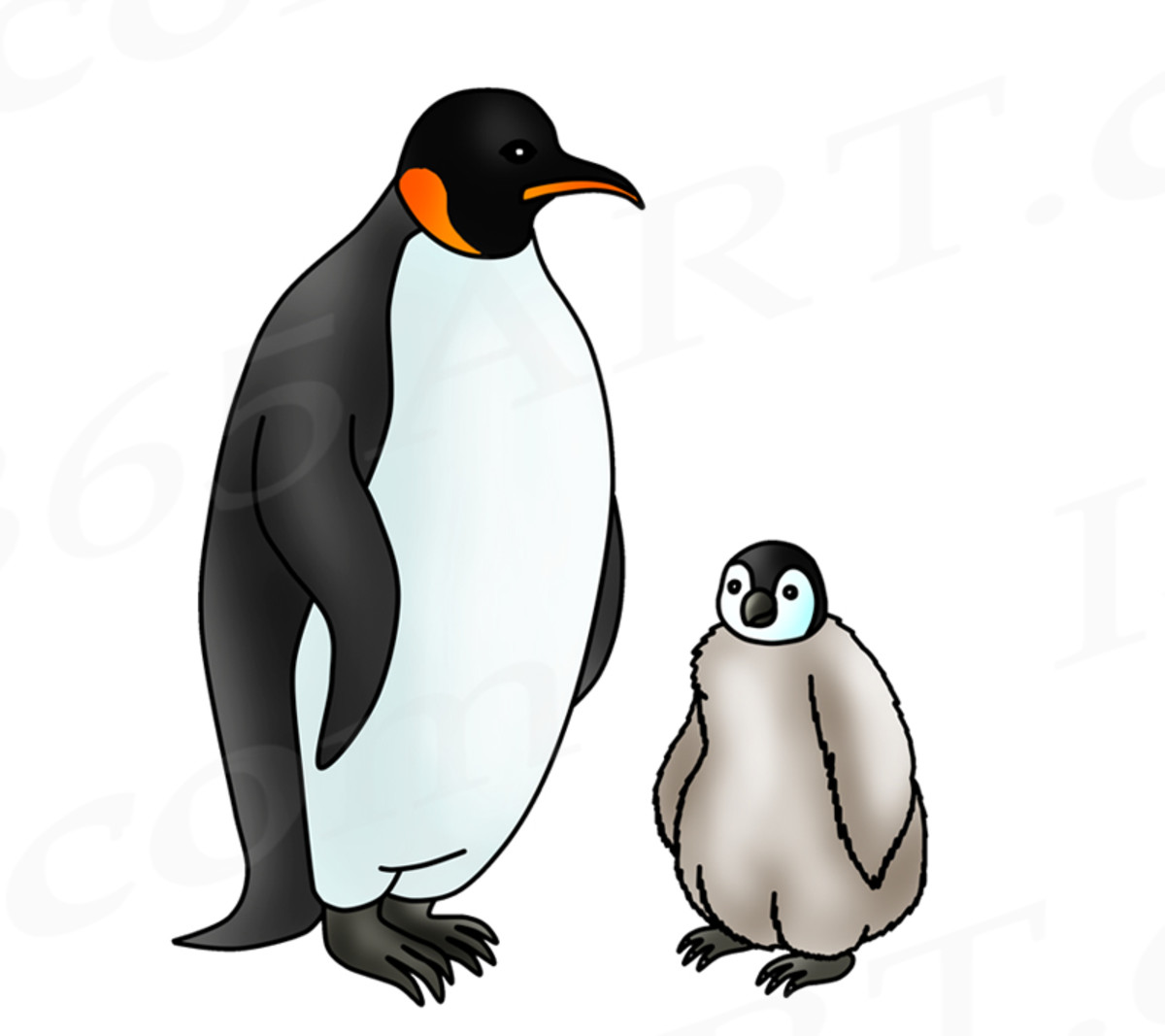 The Emperor Penguin Life Cycle - Arctic Animals