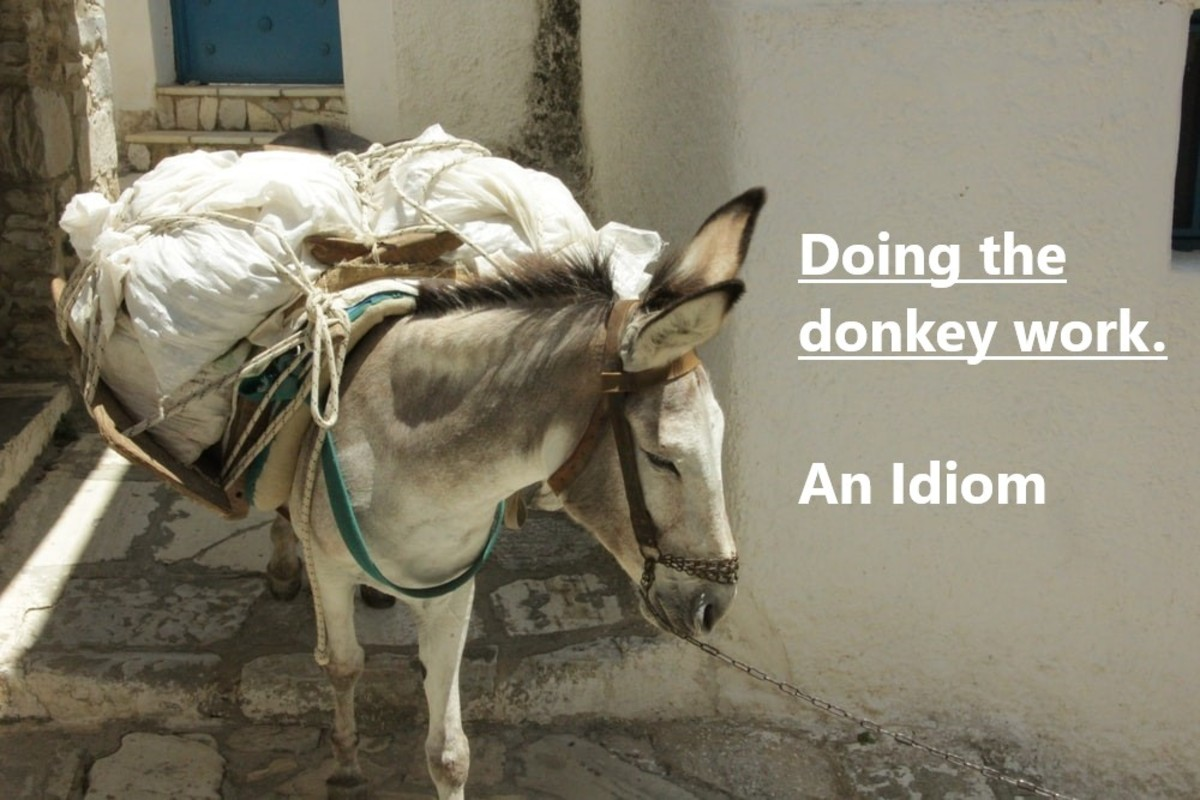 For hundreds of years, people have taken advantage of the donkey's strength and durability to carry heavy, burdensome loads. A practice, thankfully, that is becoming less acceptable to society.