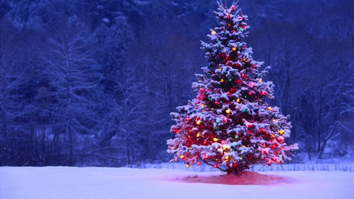 a-christmas-story-a-fiction-short-story