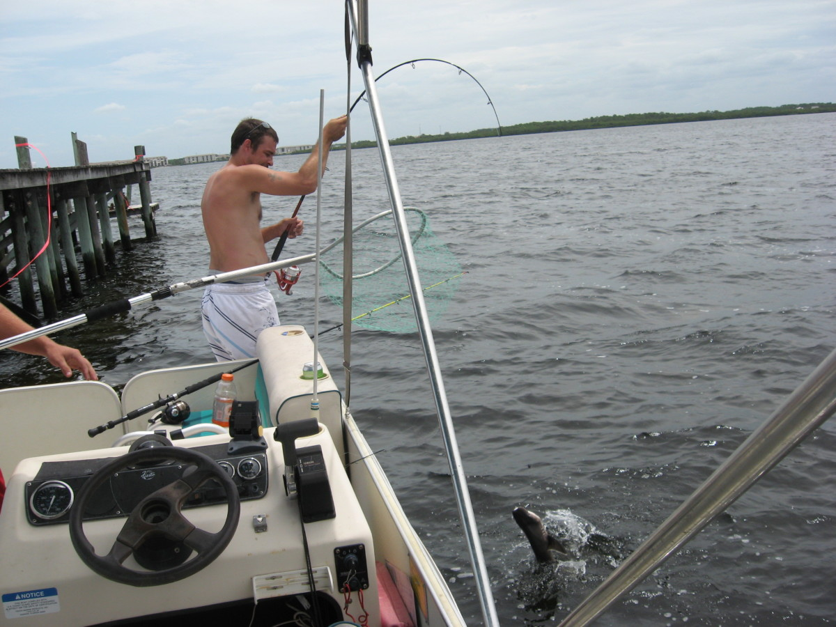 Another fish caught while flats fishing near a stilt house.