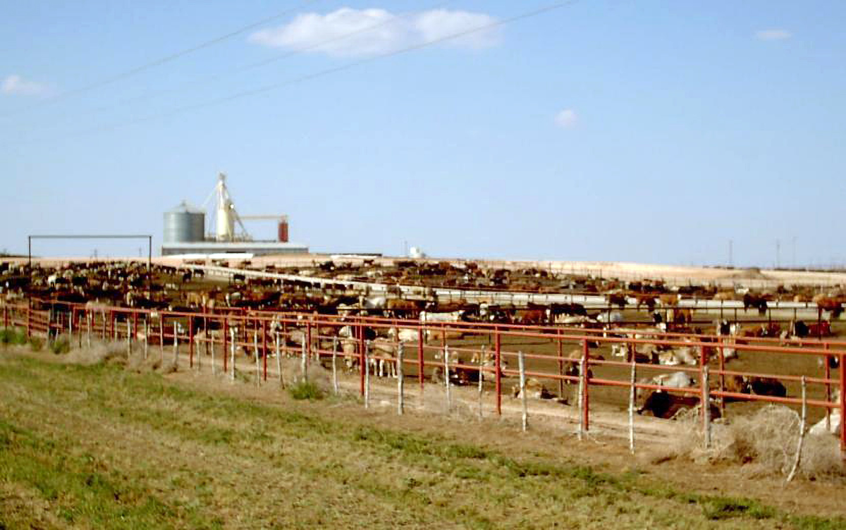 A typical feedlot in the Midwest.