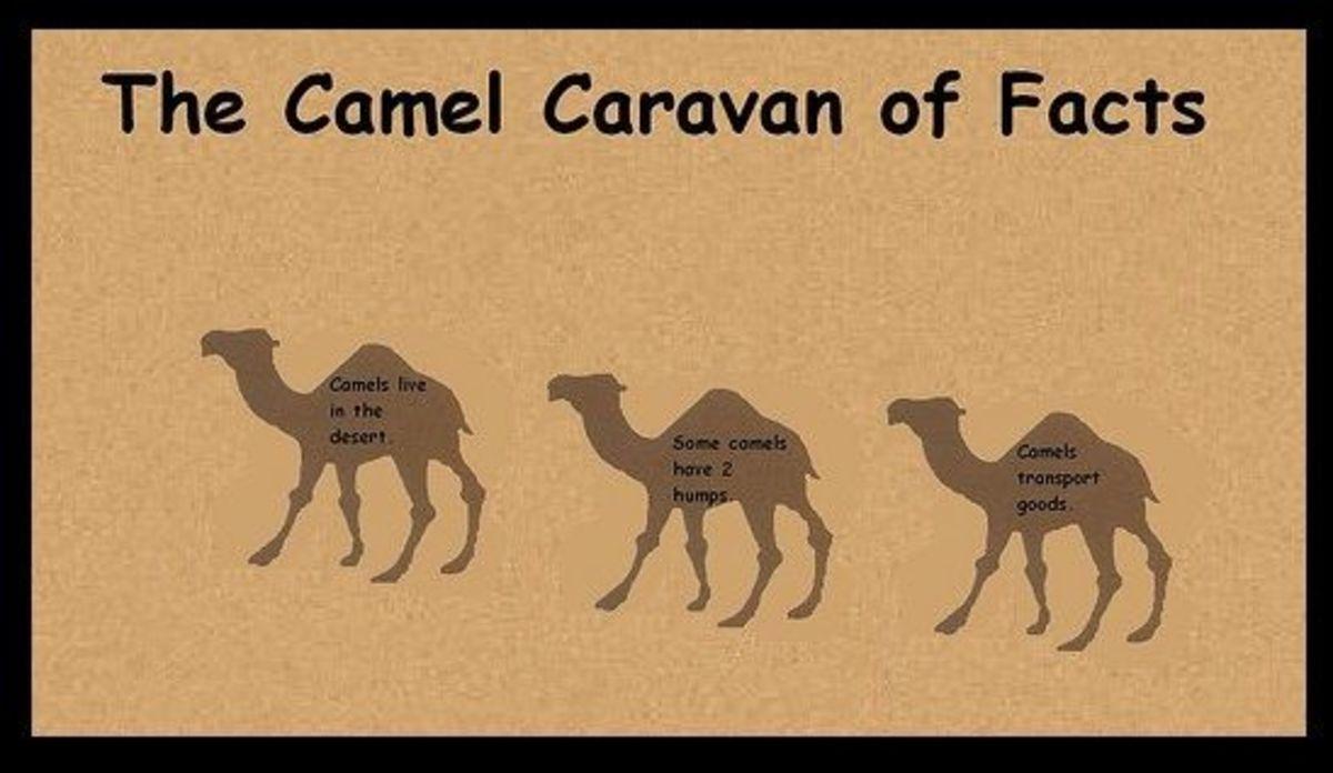 camel carava