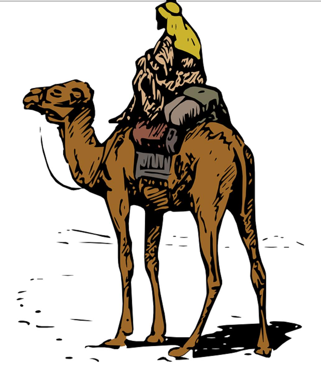 Bedoin on a Camel