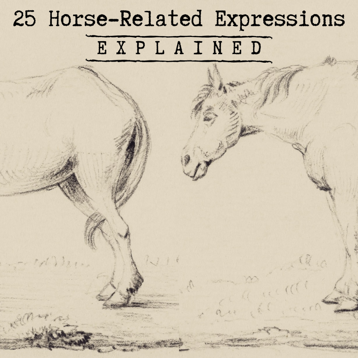 Have you ever noticed how many of our expressions and idioms involve horses in some way?