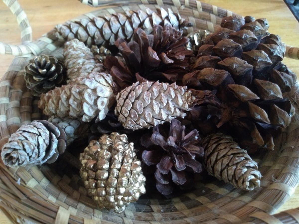 Bleached Pinecone Centerpiece