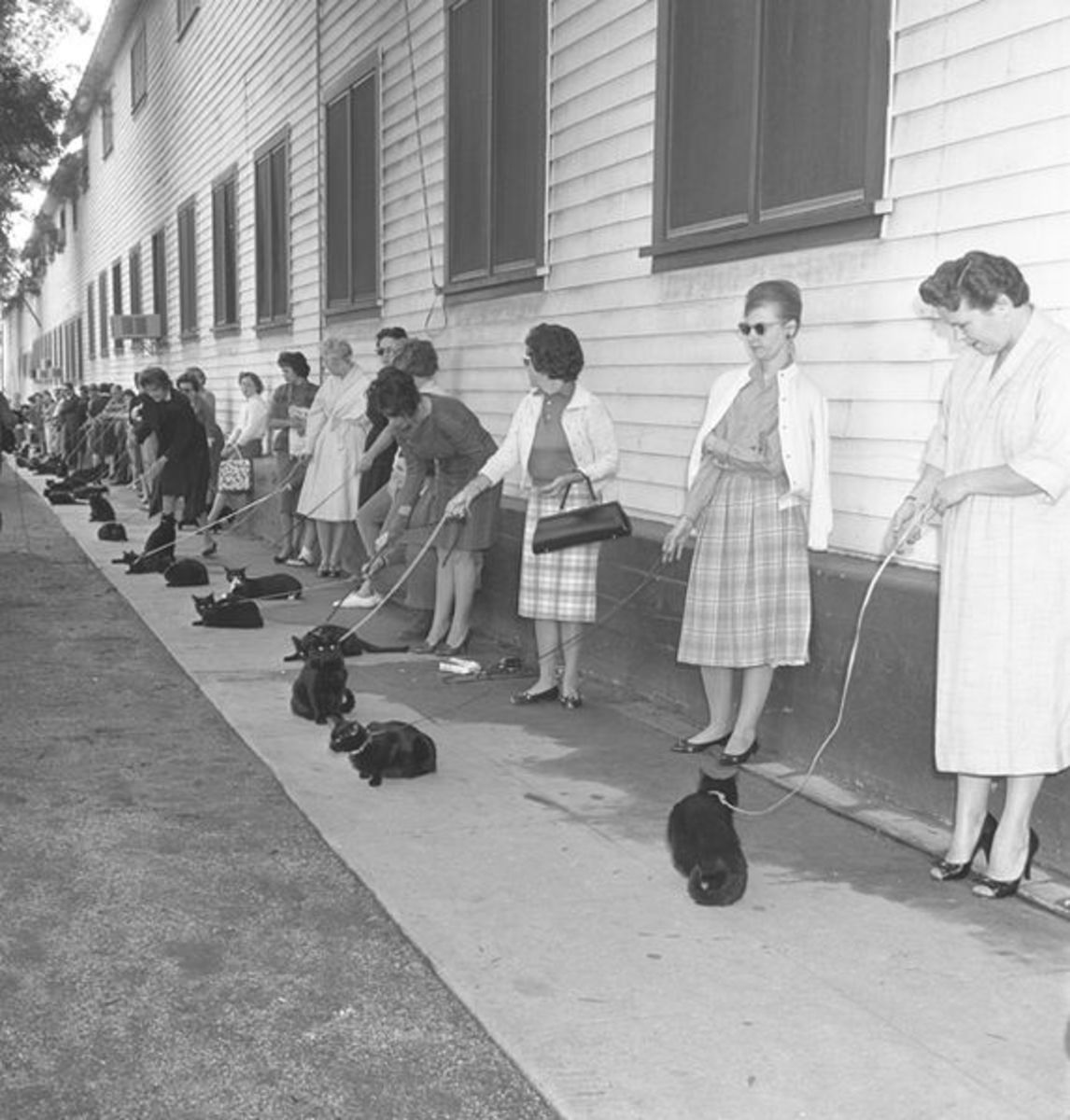 Casting Call for Black Cats in 1961 movie Tales of Terror!