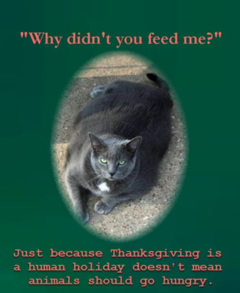 eye-opening-funny-and-unforgettable-thanksgiving-greeting-cards