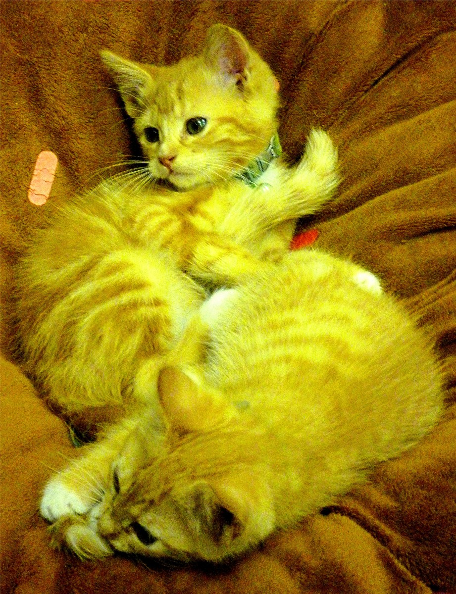 "Playful kittens inside of ""giggles for you"" at Martha's Bloomers"