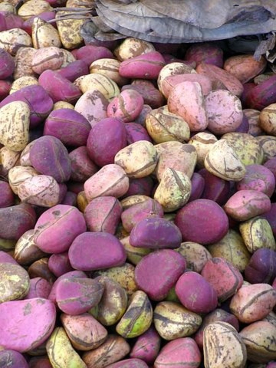 Symbolic Nature and Essential Tradition of Kola Nuts Among the Igbos in Nigeria