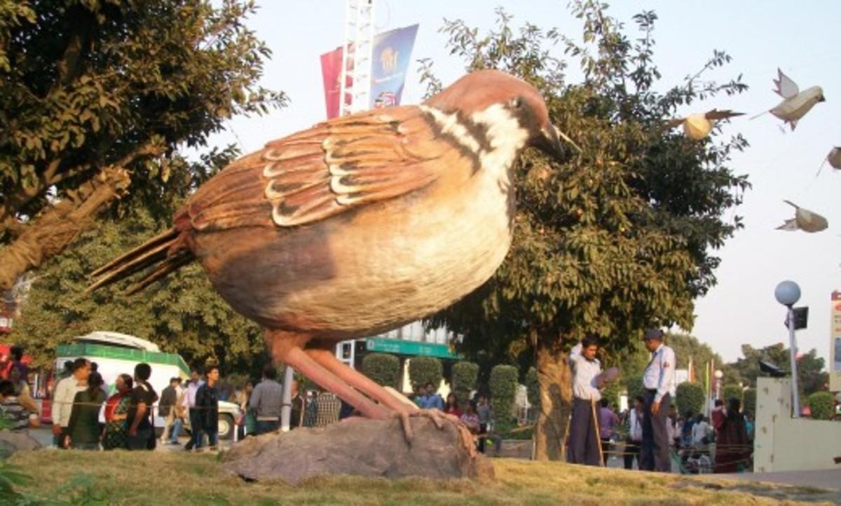 Save the citizen sparrow campaign at IITF Delhi pavilion.