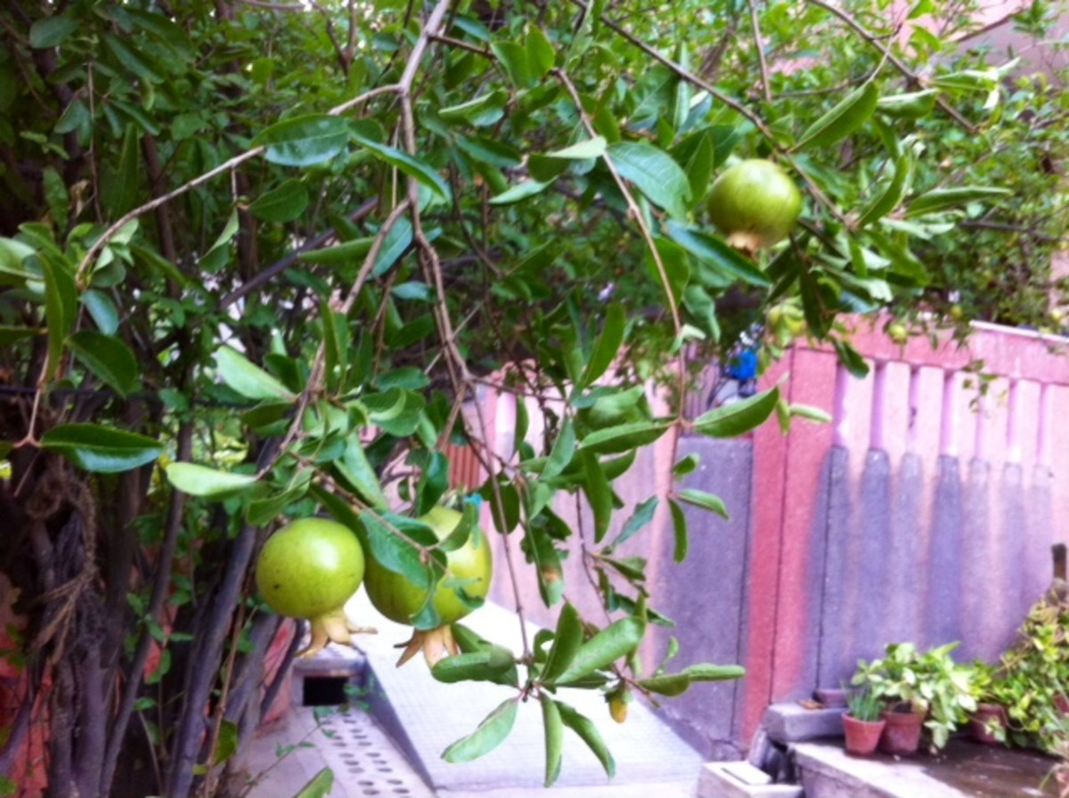 Plant more fruit trees in your area!
