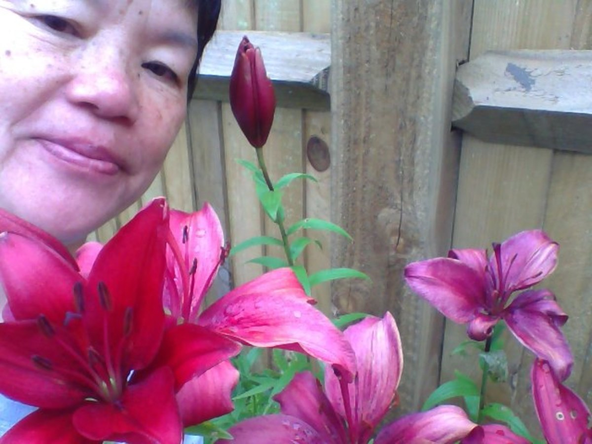 Me and my oriental lilies