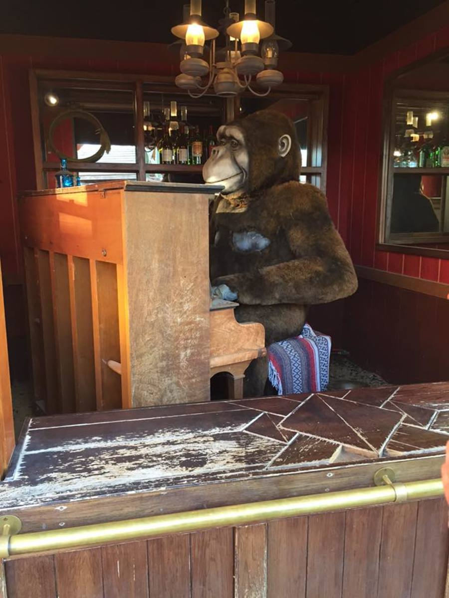 Coin operated gorilla who plays the piano and sings