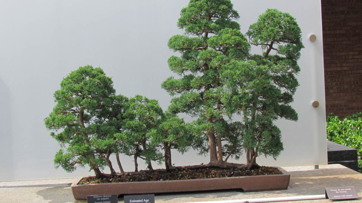 The Bonsai Collection at the Botanic Garden was intriguing. This looked like a little forest but it is actually bonsai trees. One within the collection was over 1,000 years old.