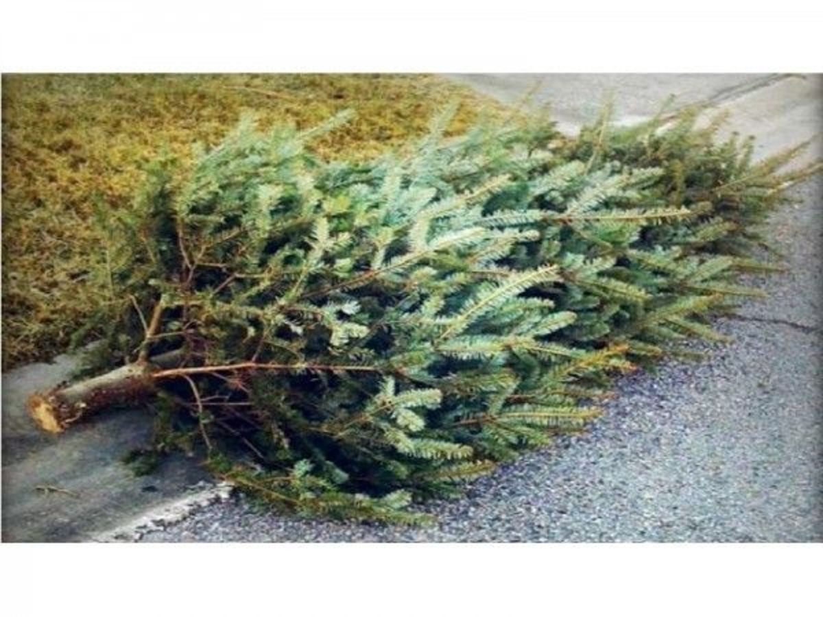 Don't put Him tout with the trash like your Christmas tree.