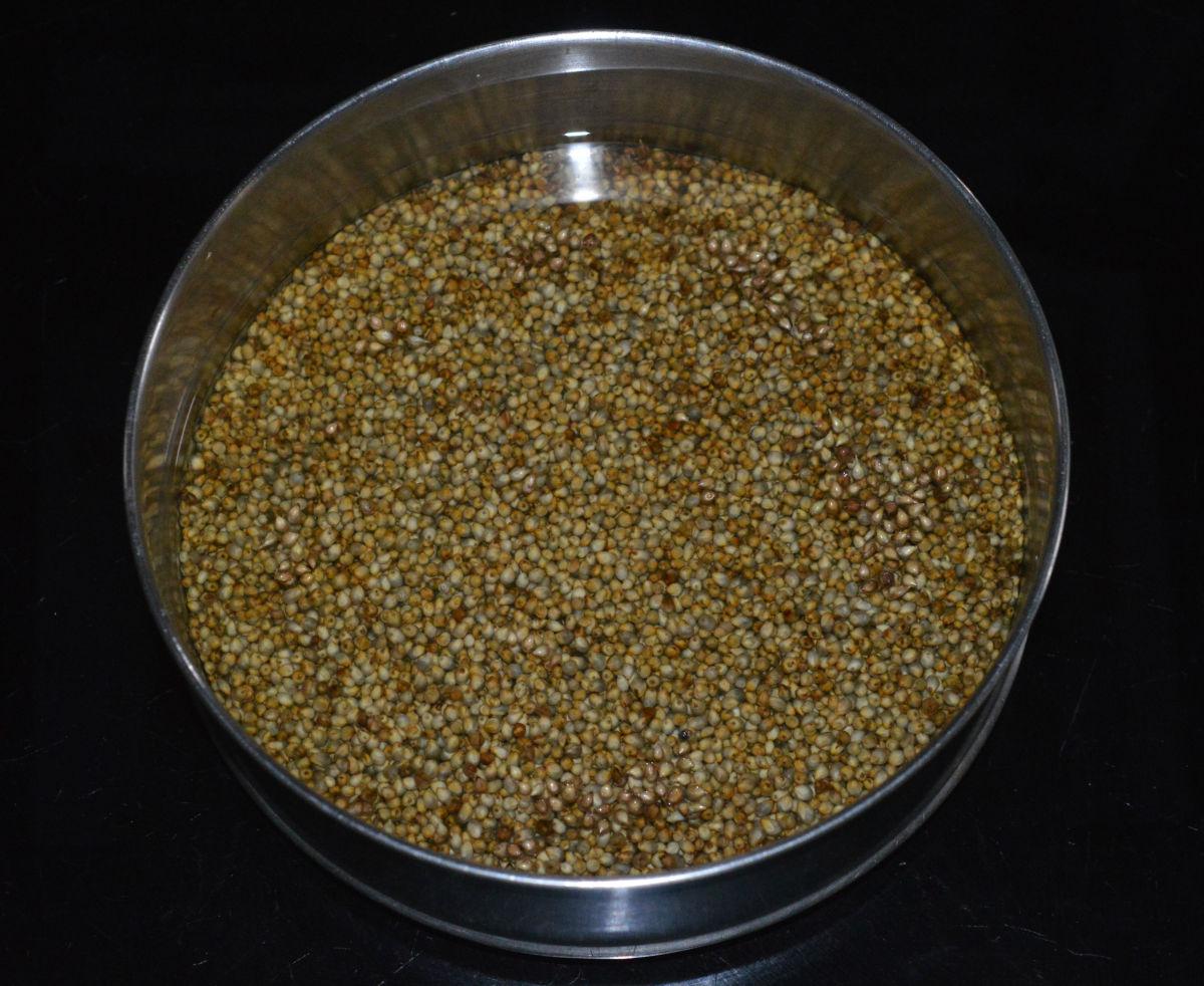 Soaked bajra (pearl millet)