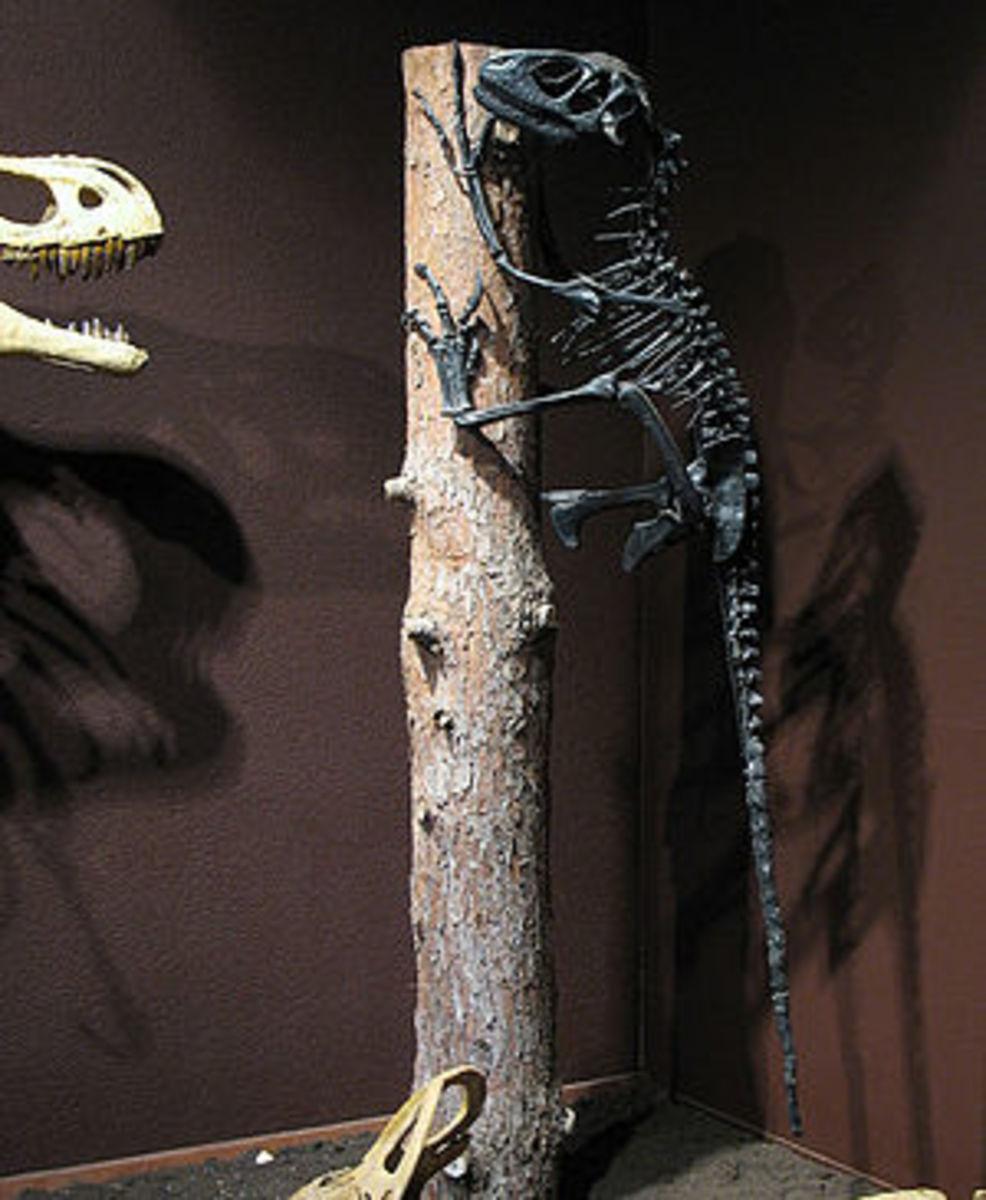 A Deinonychus climbing a tree.