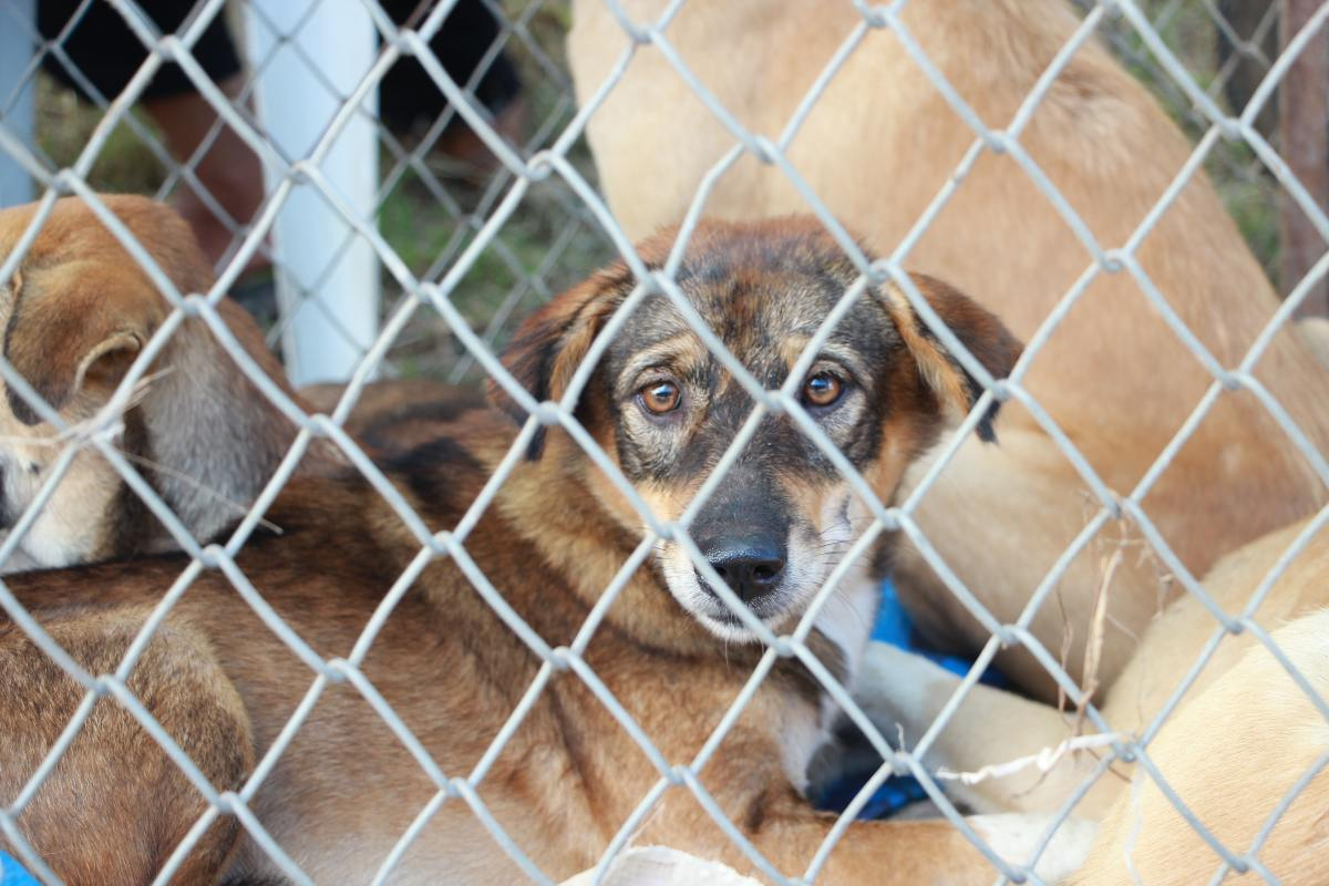Rescue Dogs Given a Second Chance at Life