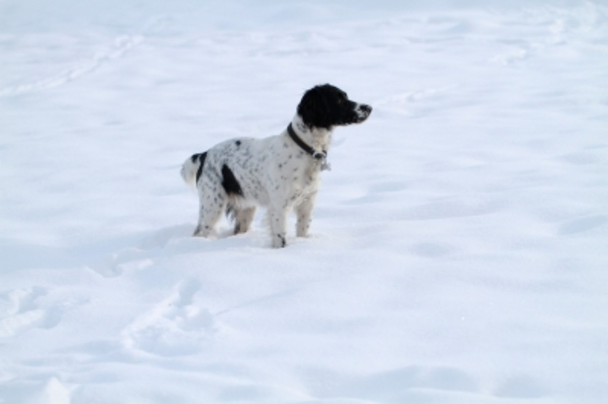 Domestic pets, though the may love to play in the snow, are not adapted to living outdoors, particularly in cold weather. Don't forget to make sure your beloved Fido is also playing safely in the snow.