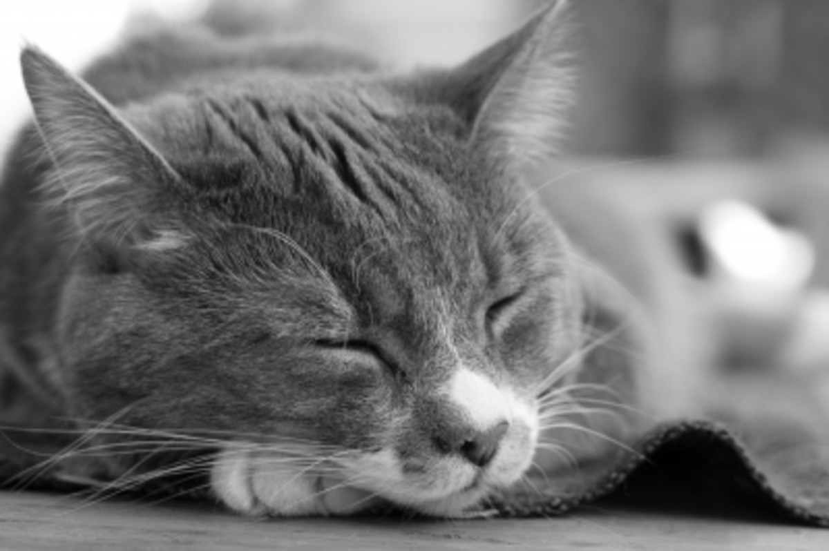 Don't let kitty sleep too close to the fireplace for warmth during the winter. The prolonged exposure to heat can dry their skin and cause potential respiratory issues.
