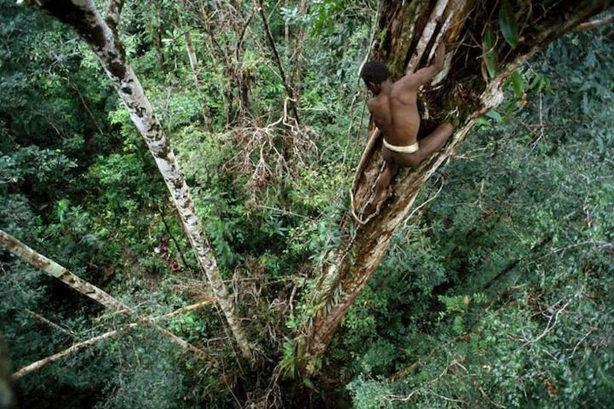 Korowai Tribe of Papua New Guinea