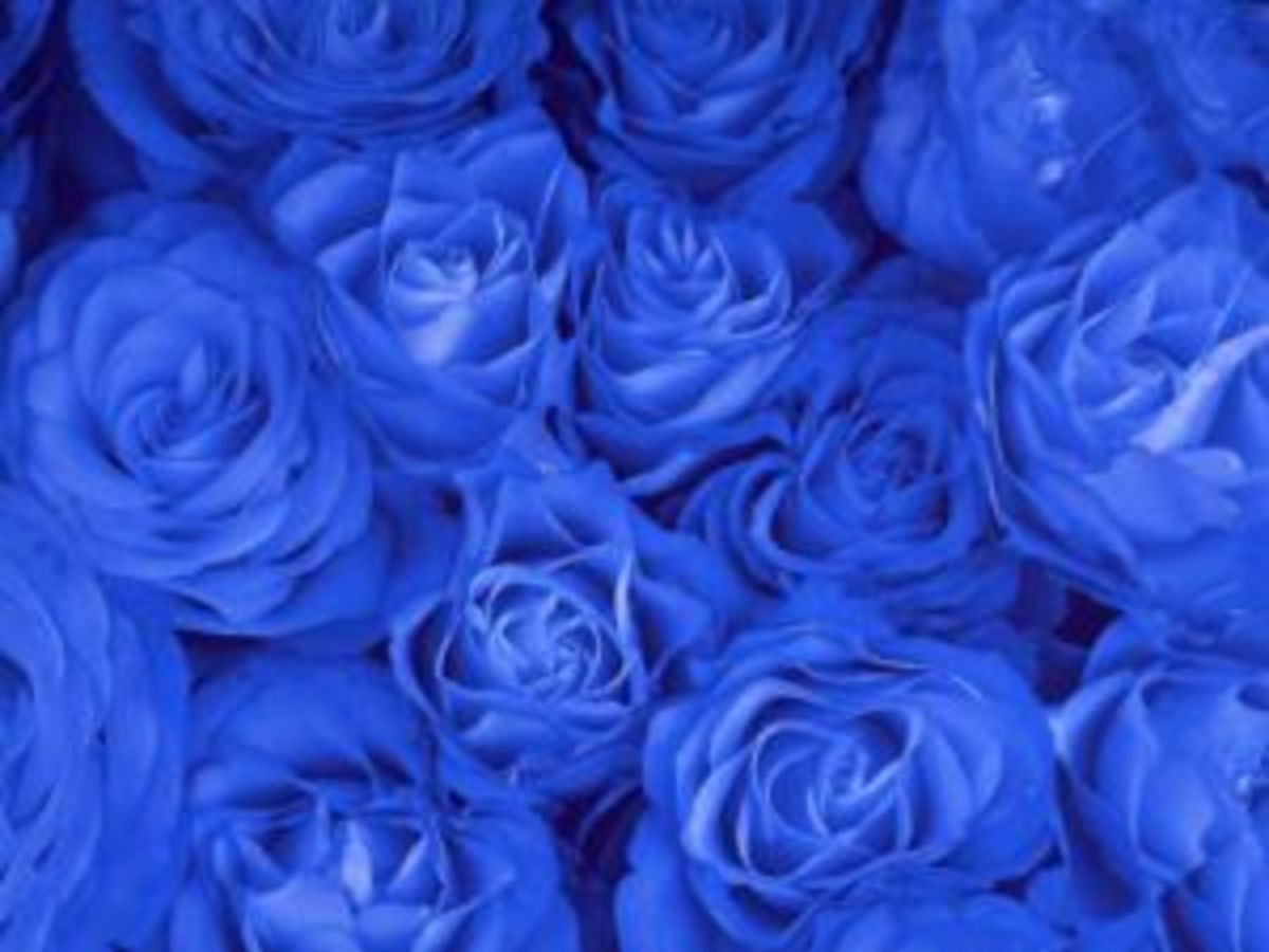 Blue Rose meaning is unattainable and mystery