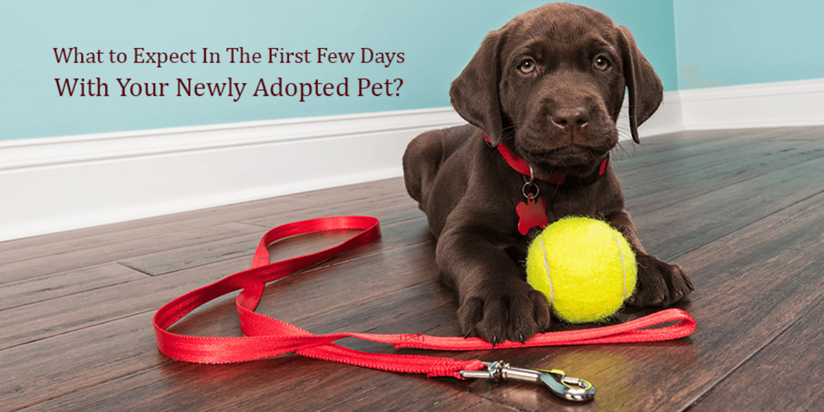 What to Expect in the First Few Days With Your Newly Adopted Pet