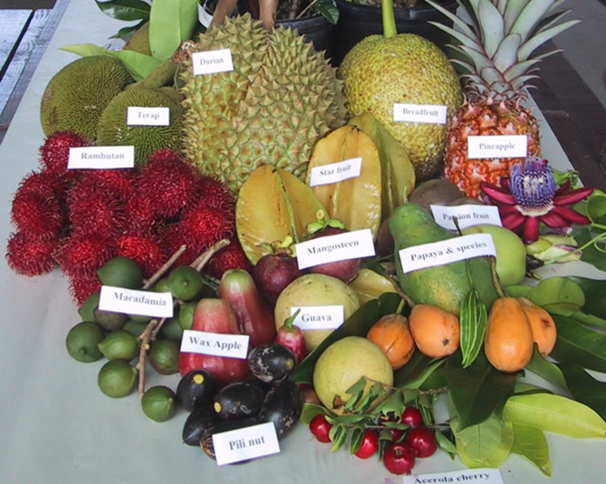 There are hundreds of different types of fruit. Each has a unique and often delicious taste.