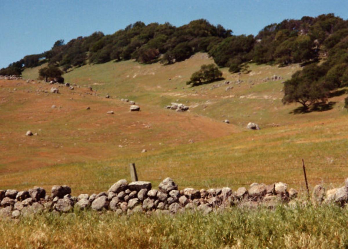 Rocky Hillsides in Carneros