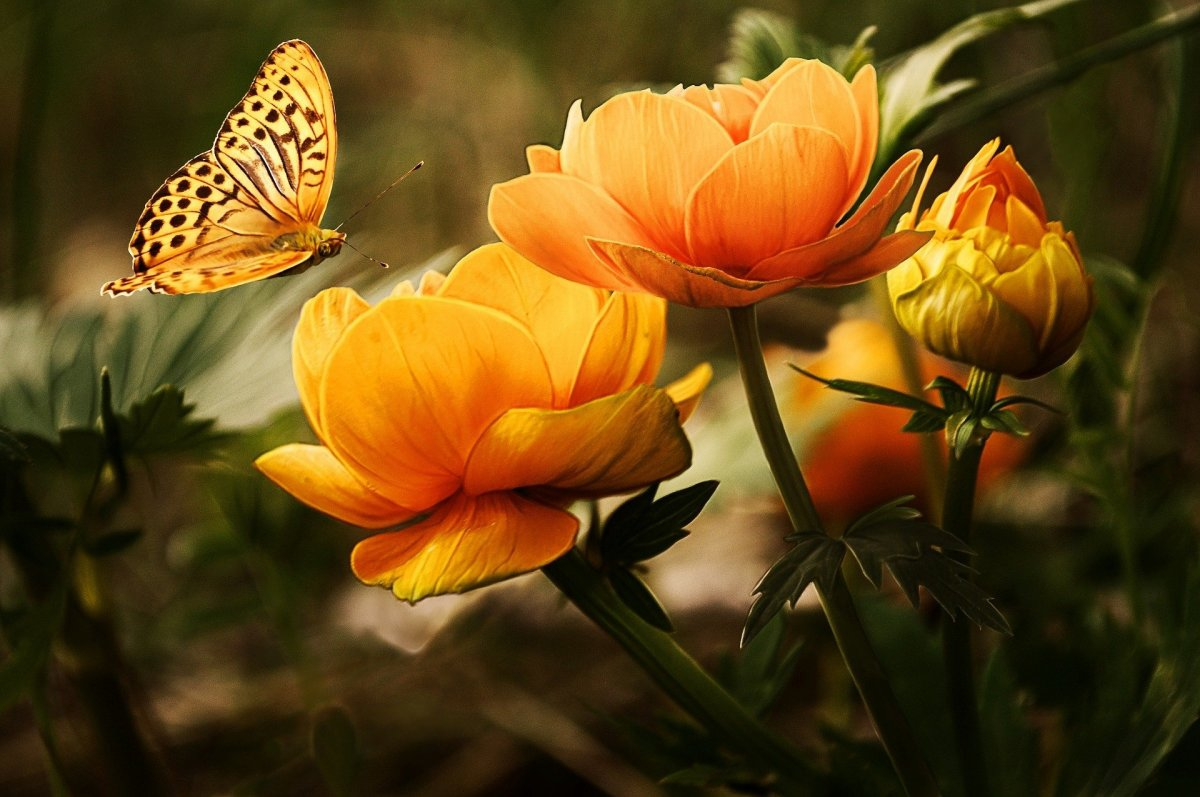 In a Soul's Garden Hidden From the Eyes of the World Are Flowers Hiding Not to Be Stepped On. -- Val Karas